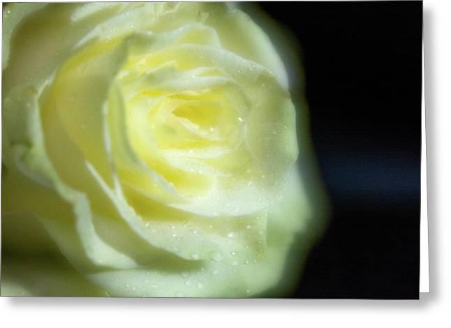 White Rose 4 Soft Greeting Card
