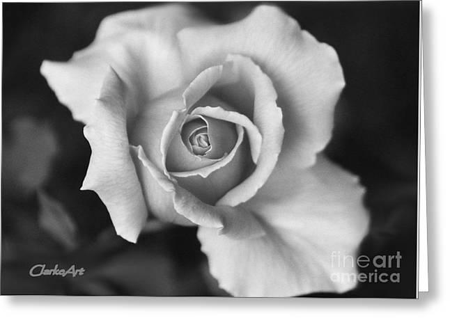 White Rose On Black Greeting Card