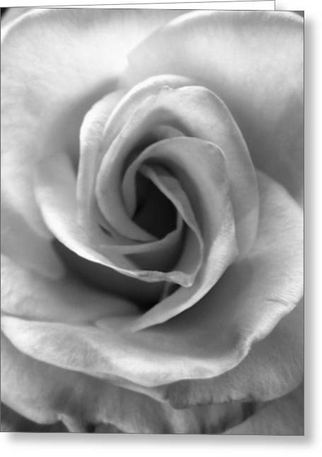 White Rose Greeting Card by Beverly Johnson