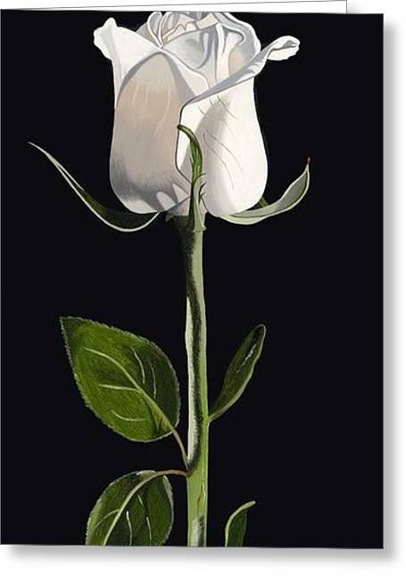 White Rose Greeting Card by Darrell Hopkins