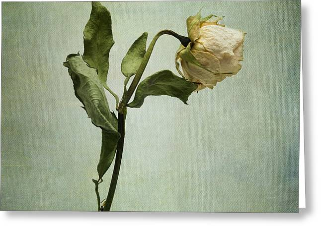 White Rose Desiccated Greeting Card
