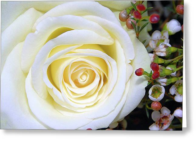 White Rose Greeting Card by Graham Taylor