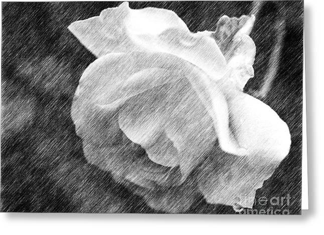 White Rose In Pencil Greeting Card