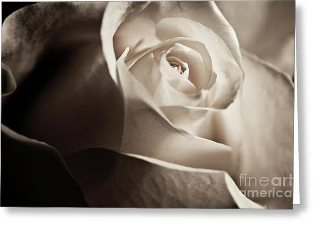 Greeting Card featuring the photograph White Rose In Sepia 2 by Micah May