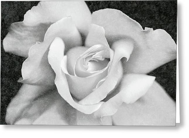 Greeting Card featuring the photograph White Rose Macro Black And White by Jennie Marie Schell