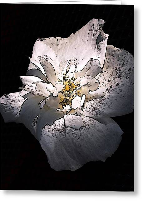 White Rose Of Sharon Greeting Card