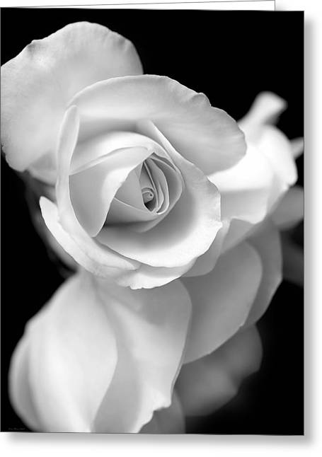 White Rose Petals Black And White Greeting Card