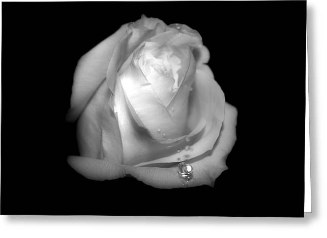 White Rose  Greeting Card by Gulf Island Photography and Images