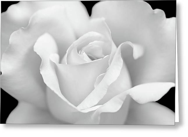 Greeting Card featuring the photograph White Rose Purity by Jennie Marie Schell