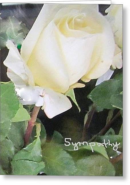 White Rose - Sympathy Card Greeting Card
