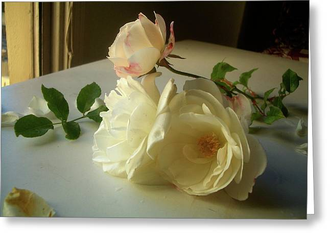 White Roses In Afternoon Light Greeting Card