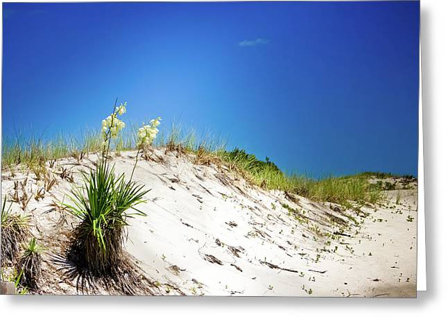 White Sands And Yucca Plant Greeting Card by Colleen Kammerer