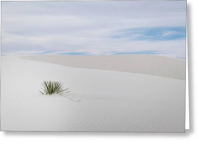 White Sands Greeting Card by Michael Osborne