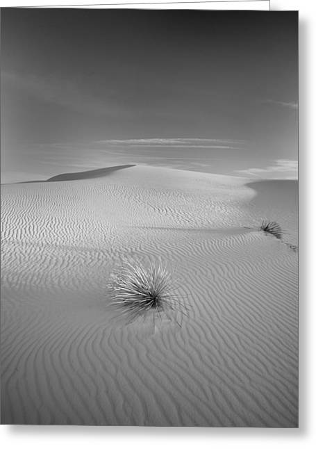 White Sands Greeting Card by Peter Tellone