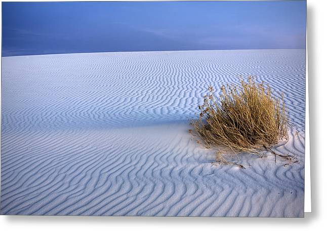 White Sands Scrub Greeting Card by Peter Tellone