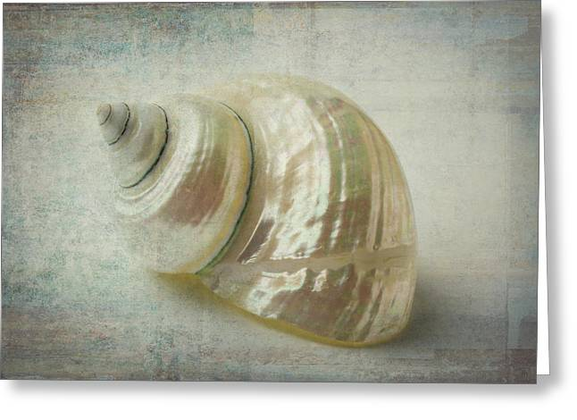 White Shell Greeting Card by Garry Gay