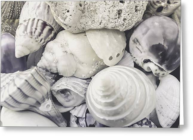 White Shells Greeting Card
