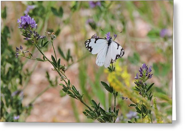 White-skipper On Lupine Greeting Card