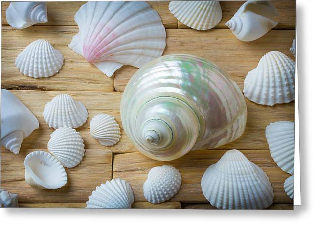 White Snail Seashell Greeting Card by Garry Gay