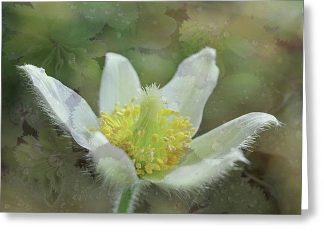 White Spring Flower With Leaves Texture Greeting Card