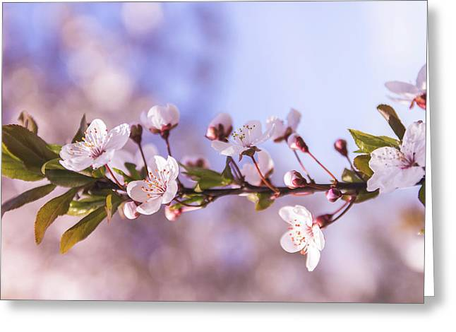 White Spring Flowers Greeting Card by Thubakabra