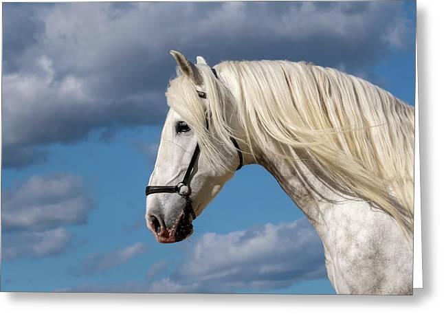 White Stallion Greeting Card