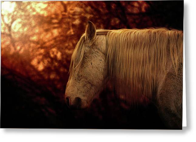 White Stallion Greeting Card