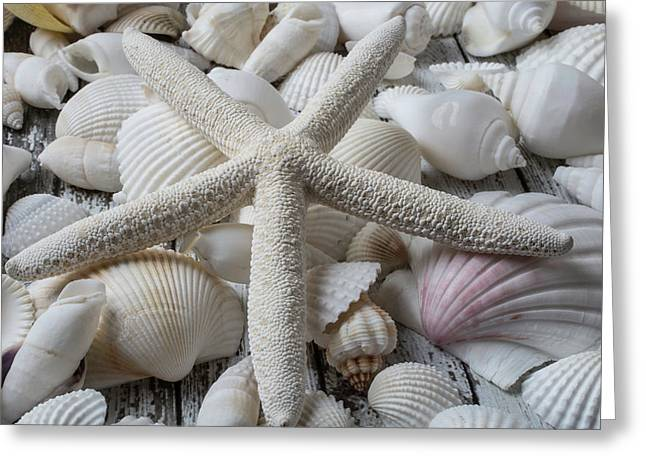 White Starfish On Seashells Greeting Card by Garry Gay