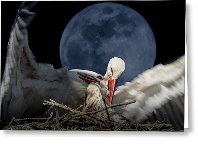 White Storks Of Fagagna With Full Moon Greeting Card