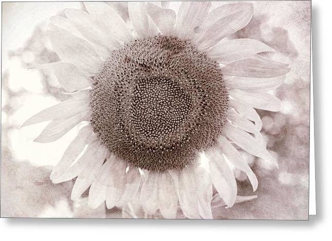 White Sunflower Square Greeting Card by Terry DeLuco