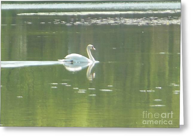 White Swan Silhouette Greeting Card