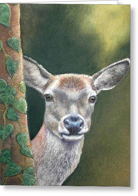 Greeting Card featuring the painting White Tail Doe At Ancon Hill by Ceci Watson