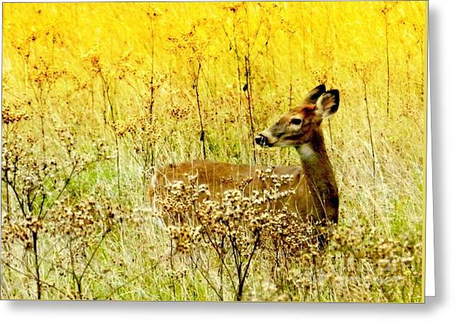 White Tail Doe On Alert Greeting Card by Julie Dant