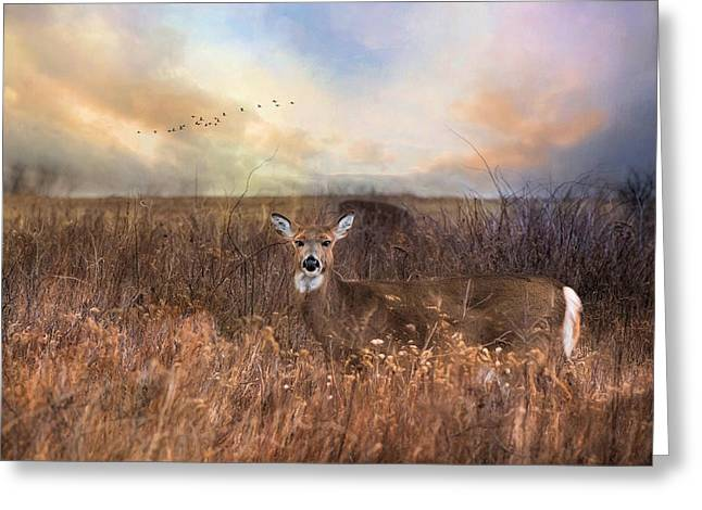 Greeting Card featuring the photograph White Tail by Robin-lee Vieira