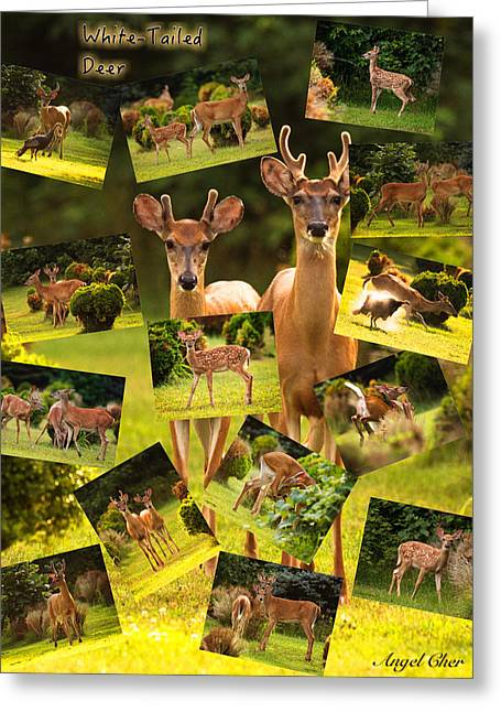 Greeting Card featuring the photograph White-tailed Collage by Angel Cher