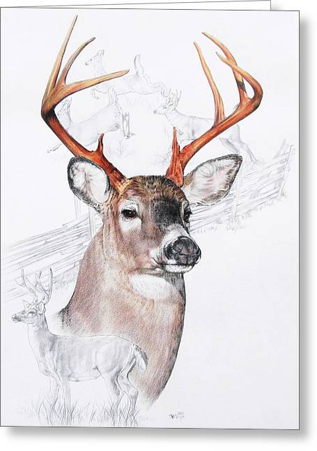 White-tailed Deer Greeting Card by Barbara Keith