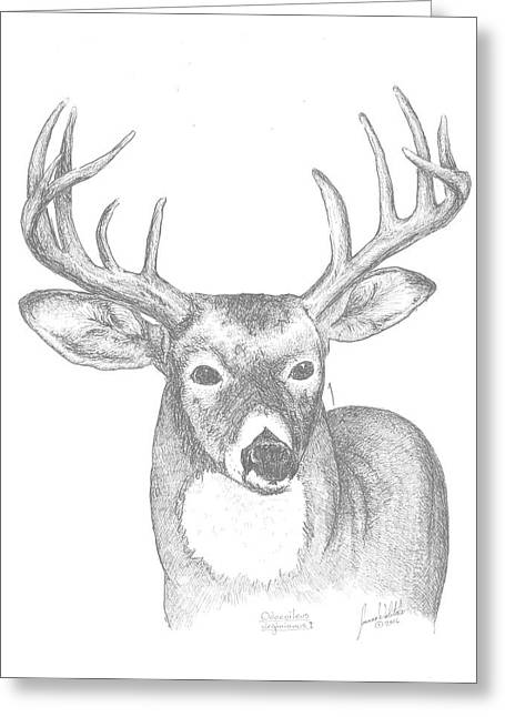 White Tailed Deer I Greeting Card