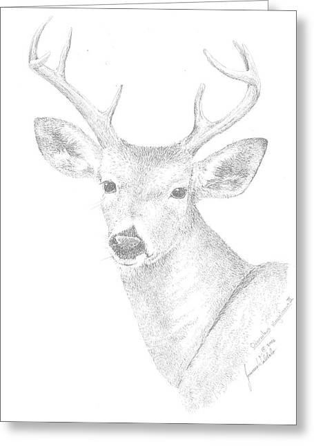 White Tailed Deer IIi Greeting Card