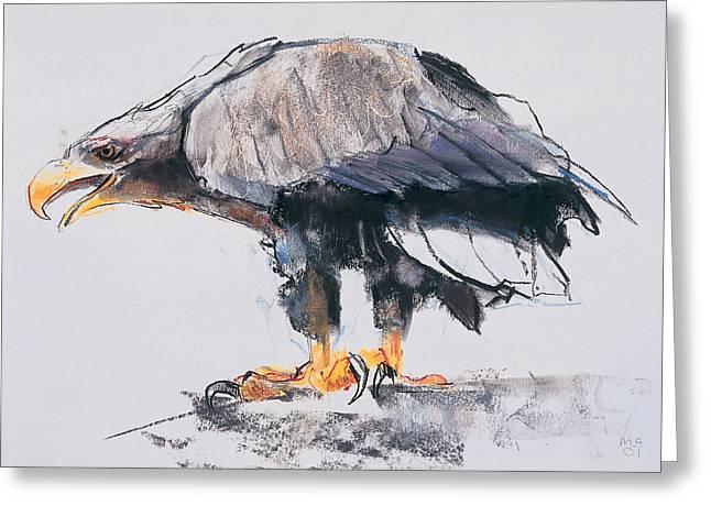 White Tailed Sea Eagle Greeting Card by Mark Adlington