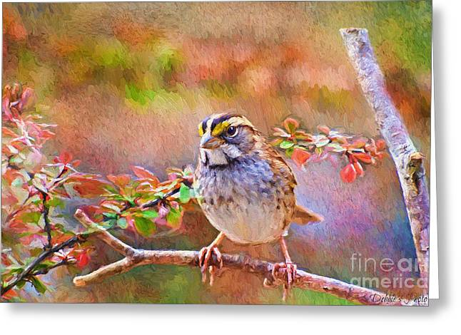 White Throated Sparrow - Digital Paint Greeting Card