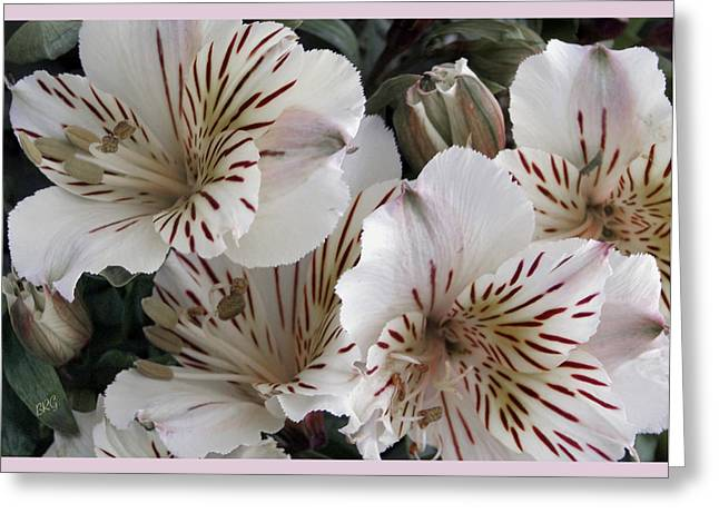 White Tiger Azalea Greeting Card