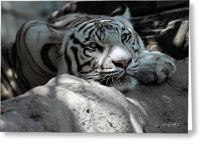 White Tiger Contiplation Greeting Card