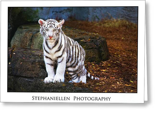 White Tiger Cub Greeting Card by Stephanie Hayes