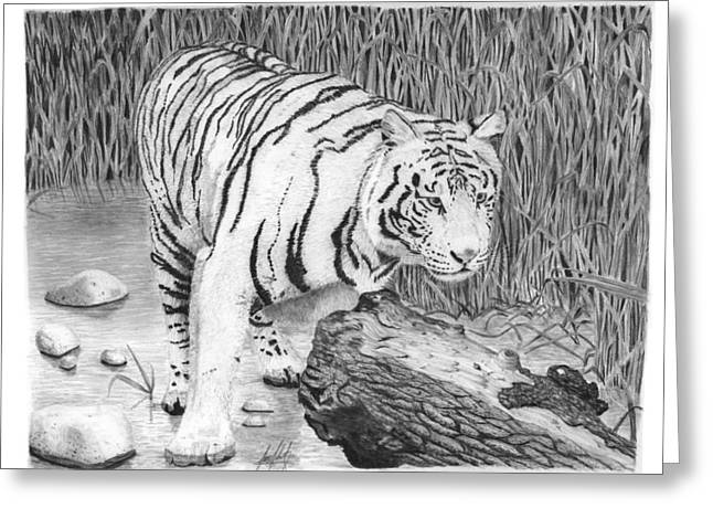 White Tiger In The Reeds Drawing Greeting Card