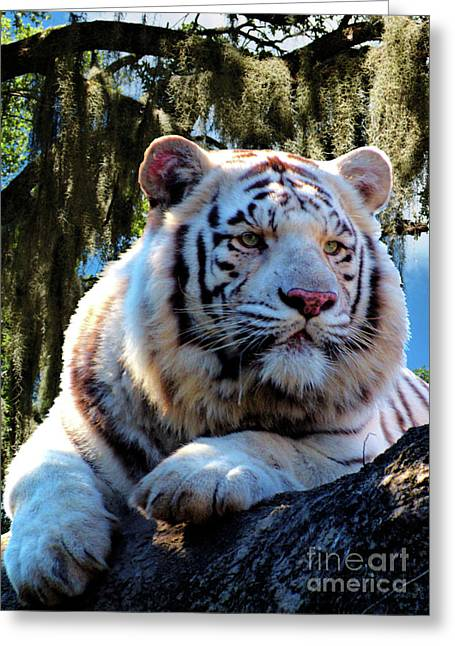 Greeting Card featuring the photograph White Tiger  by Ken Frischkorn