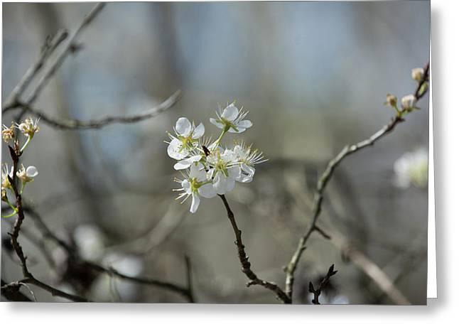 White Tree Bud Greeting Card