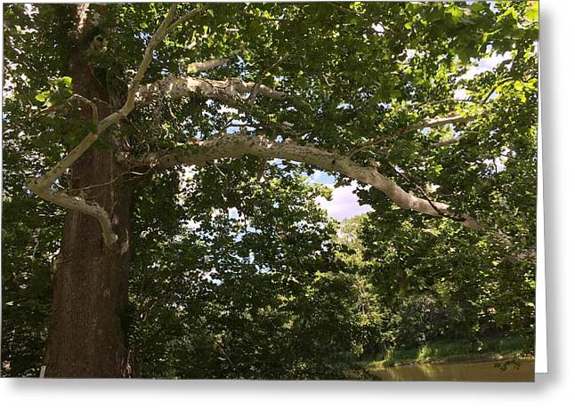 White Tree In Summer 2 Greeting Card