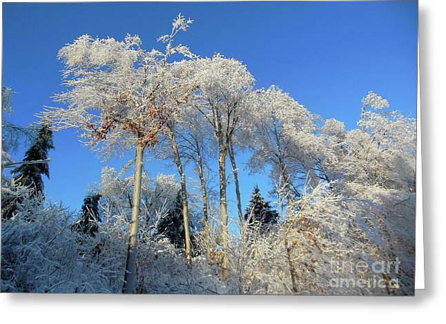 White Trees Clear Skies Greeting Card