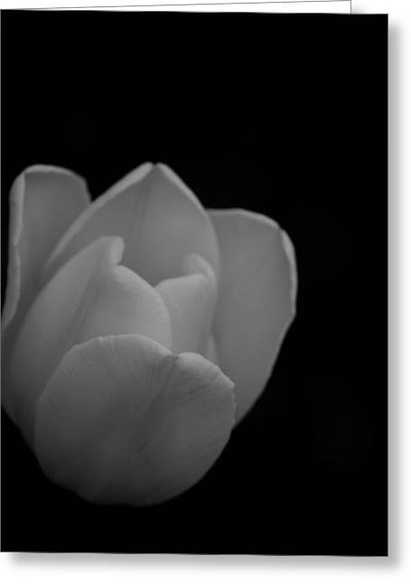 White Tulip In Black And White  Greeting Card by Michelle  BarlondSmith