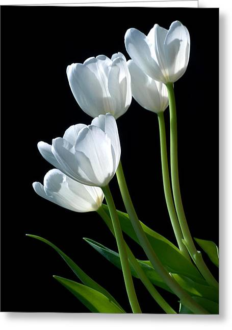 White Tulips Greeting Card by Dung Ma